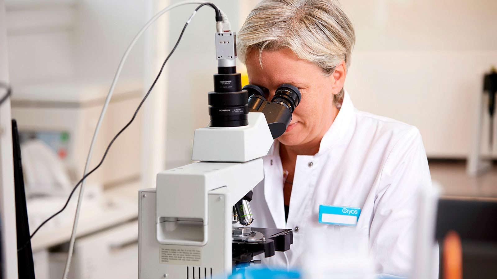 Técnico de laboratorio de Cryos evaluando con un microscopio la calidad de una muestra de esperma de donante