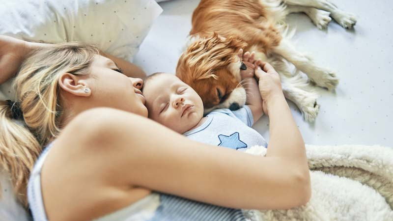 Een alleenstaande moeder die een dutje doet met haar zoon en hun hond
