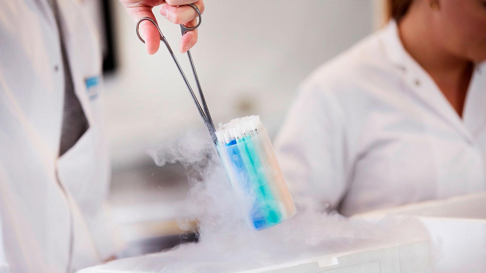 Cryos 的实验室技术人员正在处理 IUI 和 ICI 精子载杆